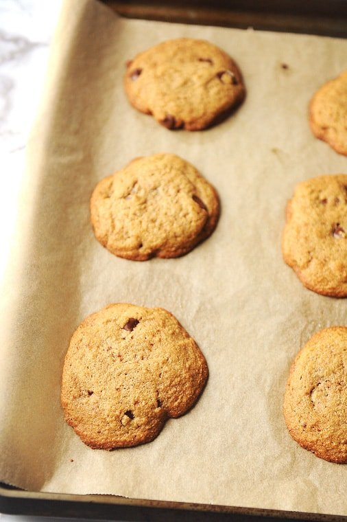 chocolate chip cookies fresh from the oven